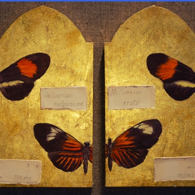 Species Icon referencing moth mimicry